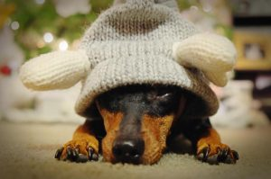 Dogs in hats phase 3