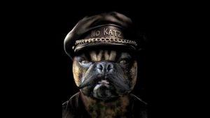 Dog in hat - November Westside BBC