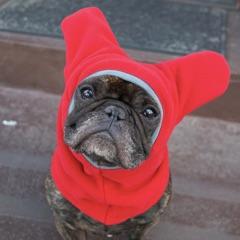 Dog in hat October
